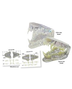 iM3 Canine & Feline Clear Jaw Model Set (IM3-D1060)